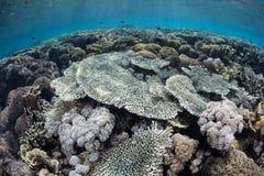 Récif sain dans le bas-fond Photo stock