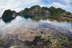 Récif sain et fragile en Raja Ampat Photo stock