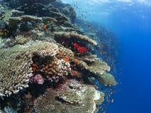 Récif sous-marin coloré Image libre de droits