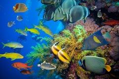 Récif sous-marin coloré avec le corail et les éponges Image libre de droits