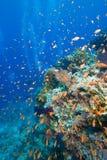 Récif tropical coloré, la Mer Rouge, Egypte Photos libres de droits