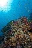 Récif tropical coloré, la Mer Rouge, Egypte Photo stock