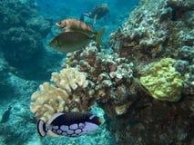 Récifs Images libres de droits