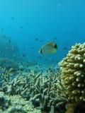 Récifs coraliens d'île de Comores de moheli, nioumachoua photo libre de droits