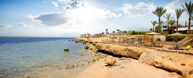 Récifs coraliens sur la plage Image stock