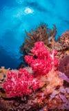 Récifs coraliens tropicaux divers Photos stock