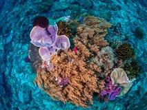 Récifs coraliens tropicaux divers Photographie stock