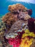 Récifs coraliens tropicaux divers Photo stock