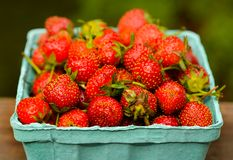 Récipient de suffisance de fraises sélectionné par main de ferme Image libre de droits