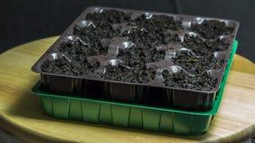 Récipient en plastique avec la terre pour des jeunes plantes Pour des jeunes plantes photo libre de droits