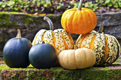 Récolte d'automne de variété colorée de potiron et de courge Photo stock