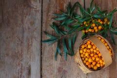 Récolte d'automne des baies utiles Photos stock