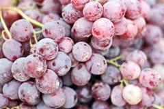 Récolte d'automne des légumes et des fruits en gros plan photographie stock libre de droits