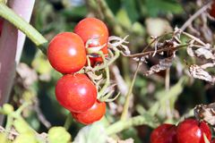 Récolte d'automne des légumes et des fruits en gros plan photo stock