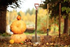 Récolte d'automne des potirons Halloween Photos libres de droits
