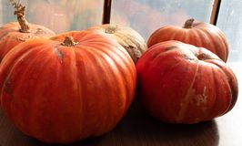 Récolte d'automne en Lithuanie 2018 image libre de droits