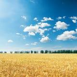 Récolte d'or et ciel bleu avec des nuages Photos libres de droits