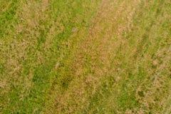 Récolte d'herbe sur un champ photo stock