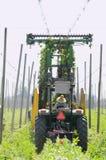 Récolte d'houblon image libre de droits