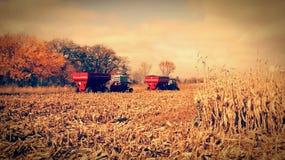 Récolte d'octobre images stock