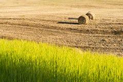 Récolte dans le jour chaud d'été sur la campagne Photo stock
