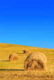 Récolte dans le jour chaud d'été sur le champ Photos libres de droits