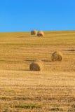 Récolte dans le jour chaud d'été sur le champ Photos stock