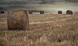 Récolte de blé Images stock