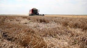Récolte de blé Image libre de droits