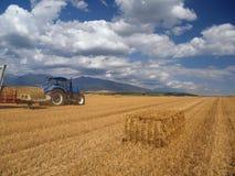 Récolte de blé sur Liptov, Slovaquie Photo stock