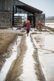 Récolte de casserole de sel Photographie stock libre de droits