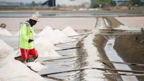 Récolte de casserole de sel Image libre de droits