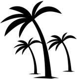 Récolte de fruits de paume de palmiers Images stock