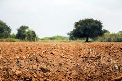Récolte de gisement de pomme de terre dans la vie d'agriculture Photographie stock libre de droits