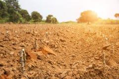 Récolte de gisement de pomme de terre dans la vie d'agriculture Photographie stock