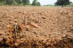 Récolte de gisement de pomme de terre dans la vie d'agriculture Images libres de droits