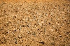 Récolte de gisement de pomme de terre dans la vie d'agriculture Photo stock