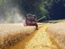 Récolte de grain Photo stock