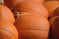 Récolte de grands potirons oranges, courges et sirops Photo stock
