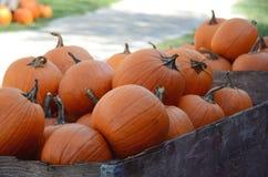 Récolte de grands potirons oranges, courges et sirops Photo libre de droits