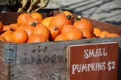 Récolte de grands potirons oranges, courges et sirops Photos libres de droits
