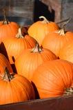 Récolte de grands potirons oranges, courges et sirops Images libres de droits