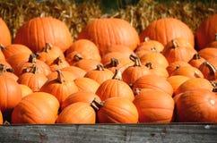 Récolte de grands potirons oranges, courges et sirops Photographie stock libre de droits
