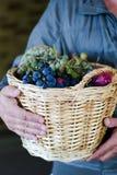 Récolte de jardin Image libre de droits