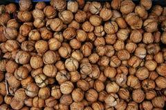 Récolte de noix d'automne - juglans regia Photographie stock