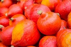 Récolte de potiron en automne Image libre de droits