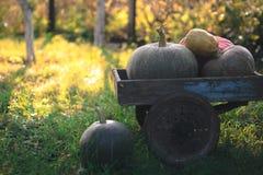 Récolte de potirons sur un vieux chariot en bois images stock