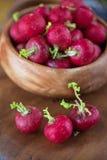Récolte de radis mûr Photographie stock libre de droits