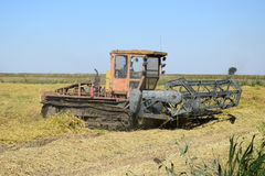 Récolte de riz Images stock