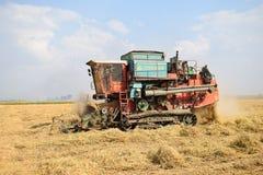 Récolte de riz Photographie stock libre de droits